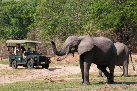 Safaris And Game Drives