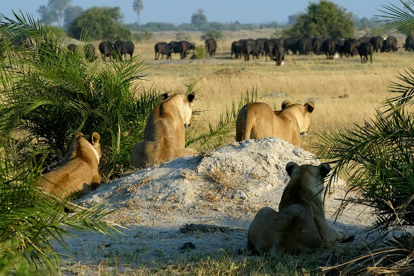 Zimbabwe's True Wildroutes Safari