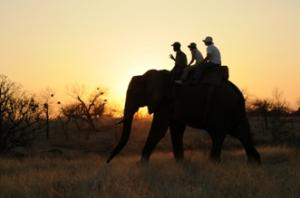 Elephant Ride Tour Packages