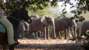 Zambezi Horse Trail Tour Packages