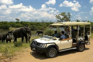 Chobe Day Tour Packages