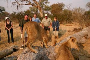 Walking With Lions Tour